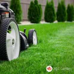 Seme trave za dvorište