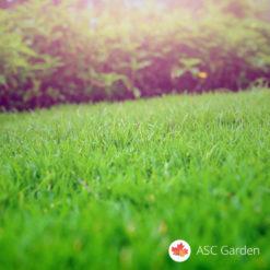 Trava za sunčane terene