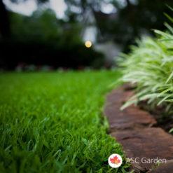 Seme trave za senku