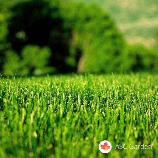Seme trave za sunčane terene