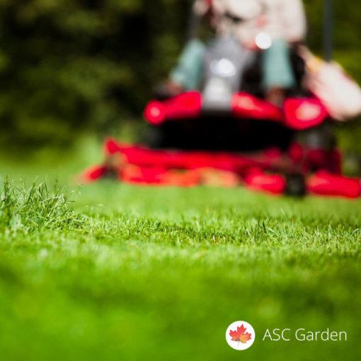 Seme trave za nov travnjak
