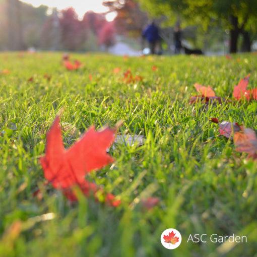 Parkovska trava Panorama