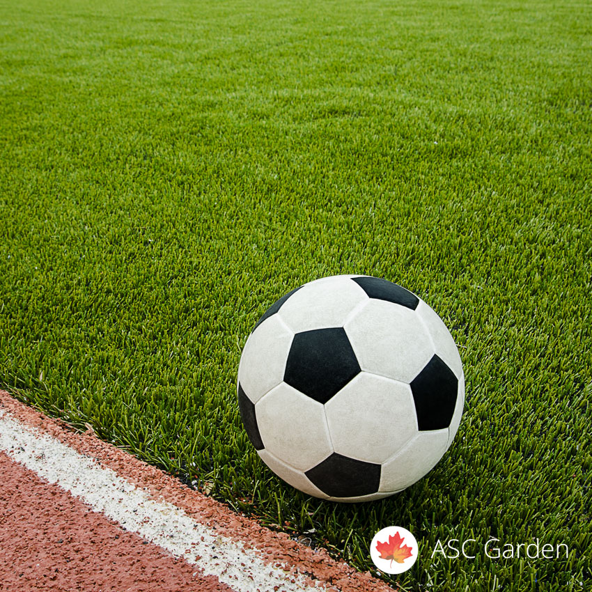 Seme trave za sport