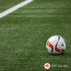 Seme trave za sportske terene