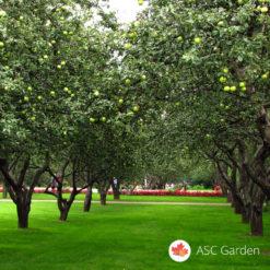 Seme trave za voćnjake i vinograde