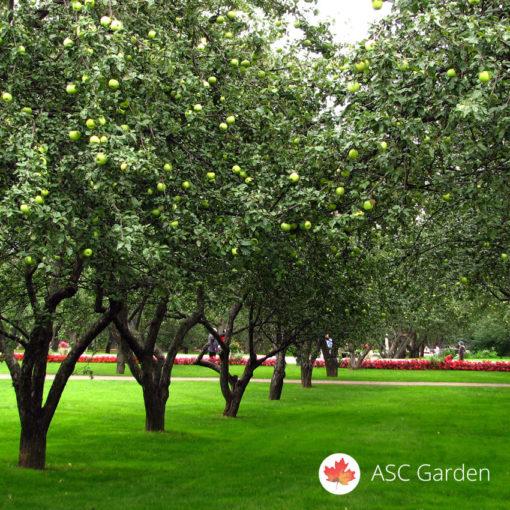 Seme trave za voćnjake